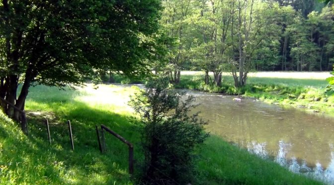 Amerikaanse rivierkreeft in de Orke